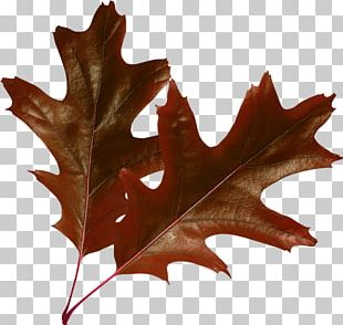 Raster Graphics Leaf Autumn Leaves PNG