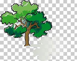 Shade Tree Oak PNG