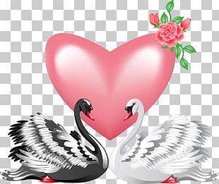 Black Swan Bird Valentine's Day PNG