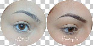 Eyelash Extensions Eyebrow Eye Shadow Hair Coloring PNG