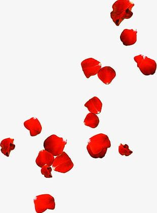 Rose Petals Drift Valentines Day PNG