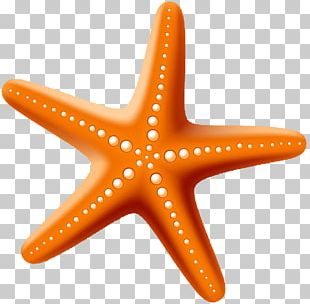 Starfish Drawing Stock Photography PNG