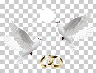 Wedding Ring Marriage Wedding Ring PNG