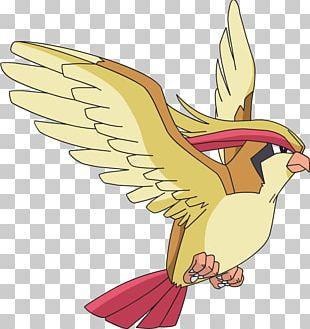 Pokémon GO Ash Ketchum Pidgeotto PNG