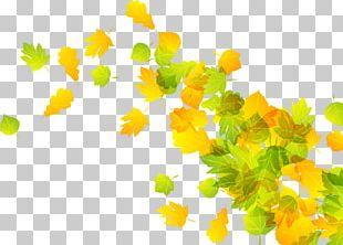 2 Leaf Autumn PNG