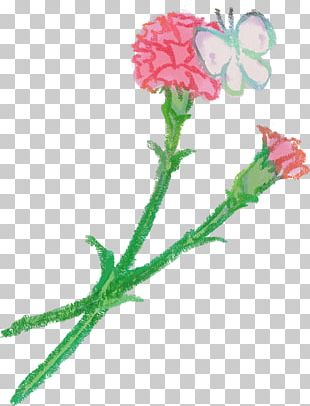 Carnation Petal Flower Rose PNG