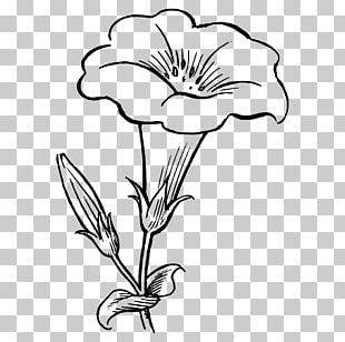 Flower Coloring Book PNG
