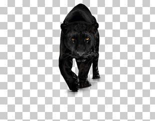 Mammal Cat Like Mammal Carnivoran PNG