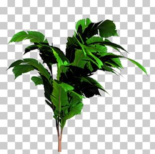 Banana Leaf Tree PNG