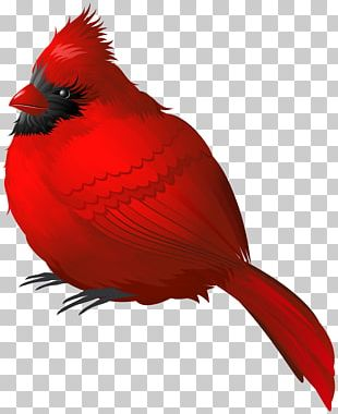 Winter Bird PNG