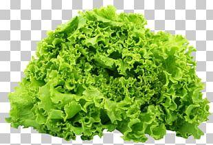 Butterhead Lettuce Romaine Lettuce Vegetarian Cuisine Salad Vegetable PNG