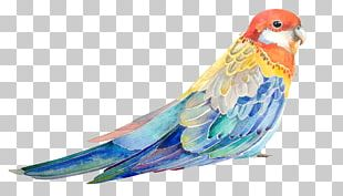 Bird Parrot Watercolor Painting Illustration PNG