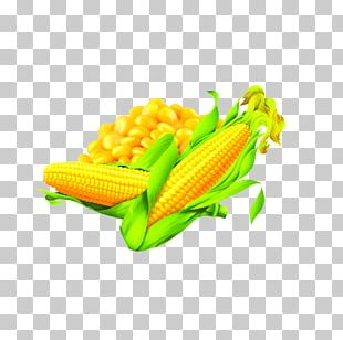 Corn On The Cob Maize Corn Oil Food PNG