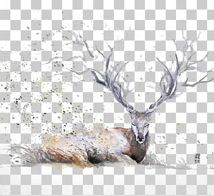 Watercolor Painting Drawing Artist Illustration PNG