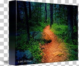 Forest Woodland Tree Gallery Wrap Biome PNG