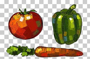 Bell Pepper Gourd Vegetable Drawing PNG