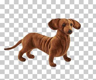Dog Breed Dachshund Puppy Companion Dog Stuffed Animals & Cuddly Toys PNG