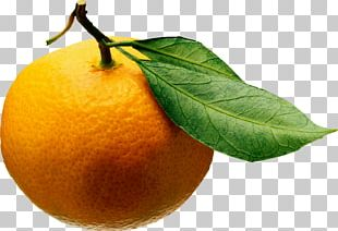 Juice Tangerine Mandarin Orange Clementine Fruit Salad PNG