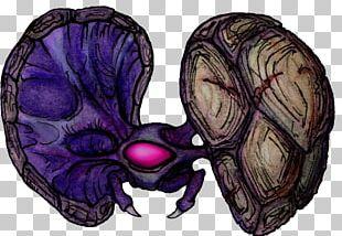 Metroid II: Return Of Samus Metroid: Samus Returns Metroid Database Bestiary Skull PNG