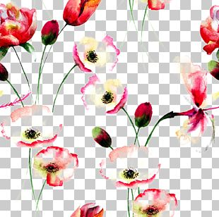 Poppy Flowers Watercolor Painting Floral Design PNG