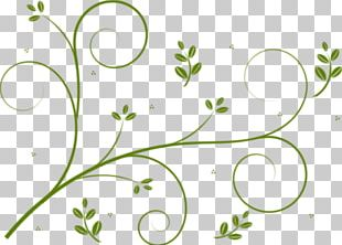 Borders And Frames Vine Flower Drawing PNG