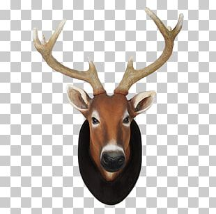 Reindeer White-tailed Deer Elk Animal PNG