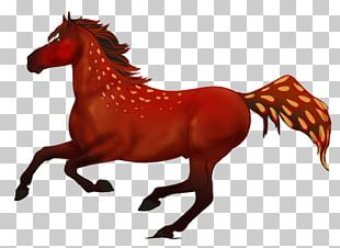 Tennessee Walking Horse Graphics Stallion Horse Racing PNG
