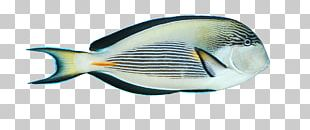 Blue Fish Black PNG