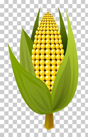 Corn On The Cob Maize Ear PNG