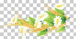 Corn On The Cob Cereal Grasses Grain Food PNG