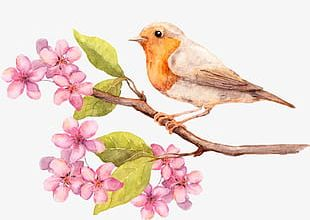 Beautiful Bird Delicate Peach Flowers PNG