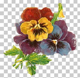 Pansy Floral Design Botanical Illustration Flower PNG