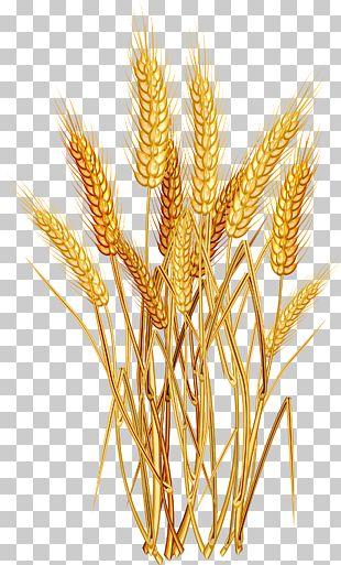 Wheat Euclidean PNG