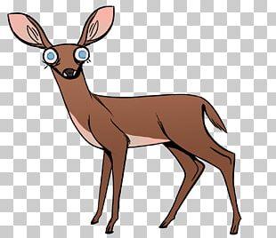 White-tailed Deer Elk Musk Deer Antler PNG