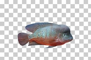 Deep Sea Fish Deep Sea Fish Ocean PNG