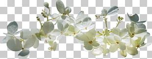 Spring Text Blossom PNG