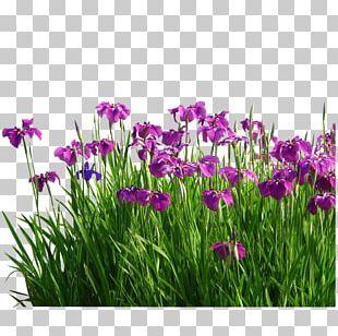 Flower Sweet Flag Garden Grasses PNG
