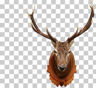 White-tailed Deer Elk Moose Red Deer PNG