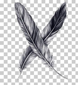 Drawing Feather Pencil Sketch PNG