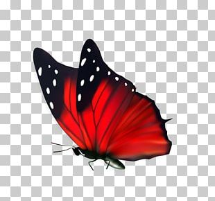 Butterfly Flower Cdr PNG
