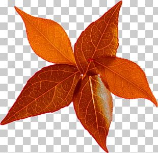 Leaf Autumn Leaves LiveInternet PNG
