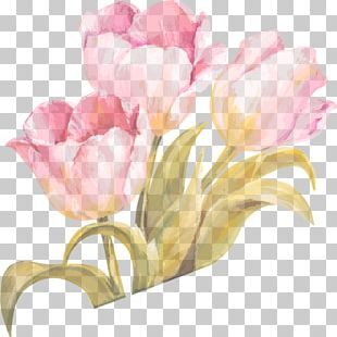 Tulip Watercolor Painting Flower PNG