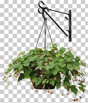 Plant Flower Landscape Architecture PNG