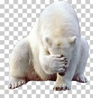 Polar Bear Giant Panda Brown Bear PNG