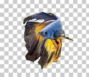 Siamese Fighting Fish Parrot Bird Blue-and-yellow Macaw PNG