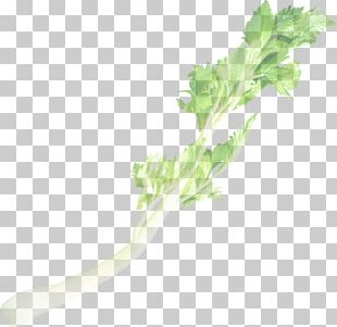 Chard Kagome カゴメ・野菜生活100 Vegetable Juice Spring Greens PNG