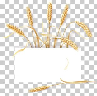 Common Wheat Barley Cereal Ear PNG