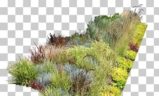 Garden Ideas Garden Design Landscaping Landscape Design PNG