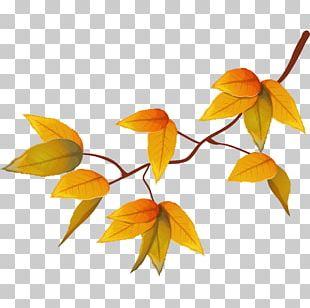 Yellow Autumn Adobe Illustrator Illustration PNG