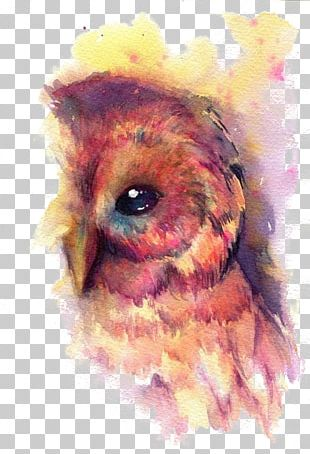 Owl Bird Watercolor Painting Art PNG